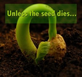 wheat-seedling
