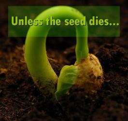 wheat-seedling